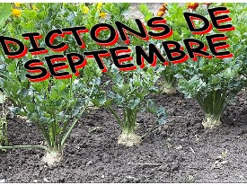 dictons_septembre
